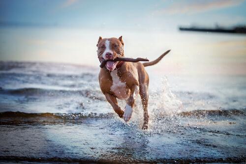 Juegos y actividades para perros