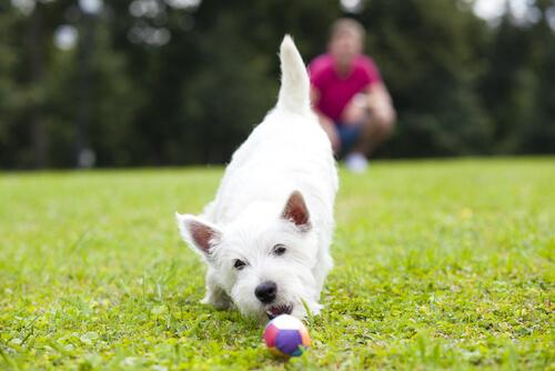Juegos para perros: actividades
