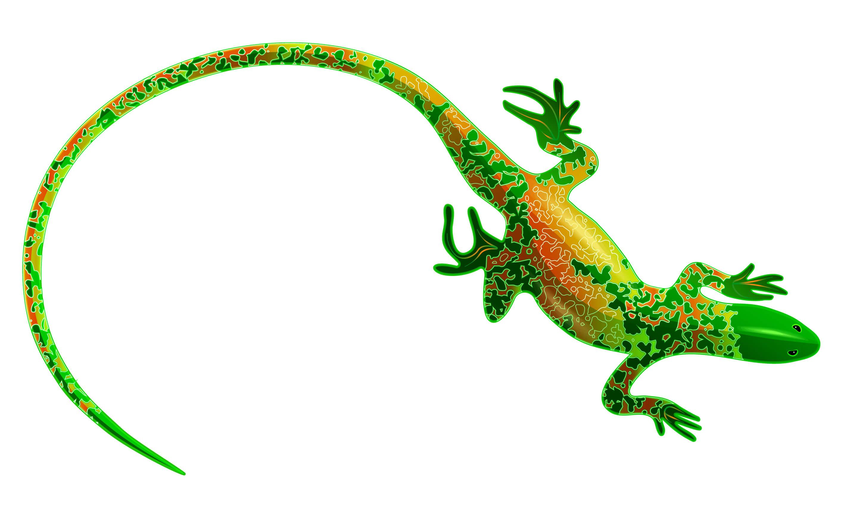 Salamandra: todo sobre este escurridizo animal