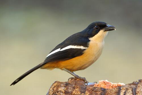 9 lugares para los amantes de aves