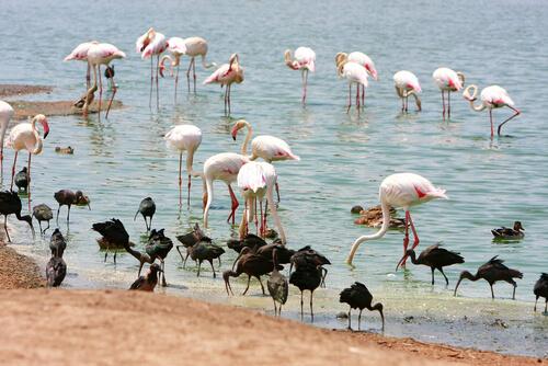 Lugares para amantes de las aves internacionales: flamencos
