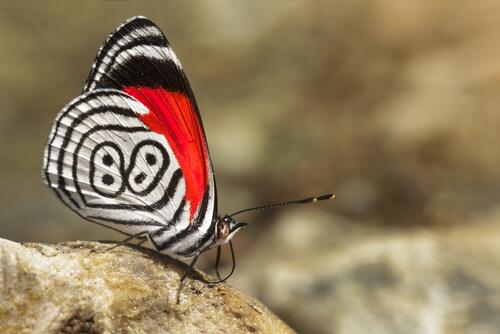 Mariposa 88: hábitat