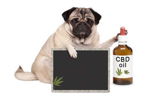 Medicina alternativa en mascotas