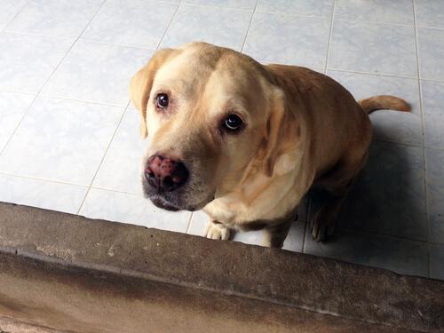 Motivos para no castigar a tu perro