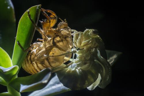 La muda de piel en los animales