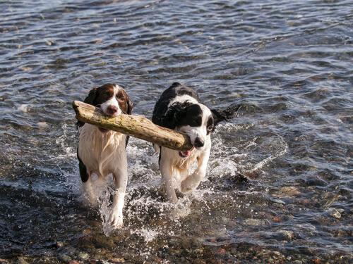 ¿Cuál es la pareja ideal para tu perro?
