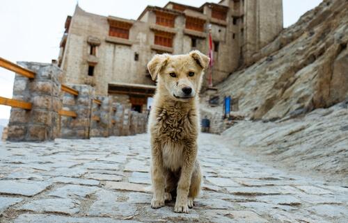 Perro desaparecido: qué hacer