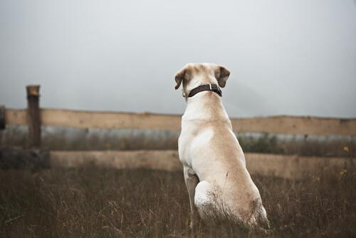 Perro perdido: qué hacer