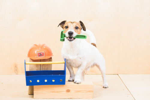 Tareas para perros, ¿qué les puedes pedir?
