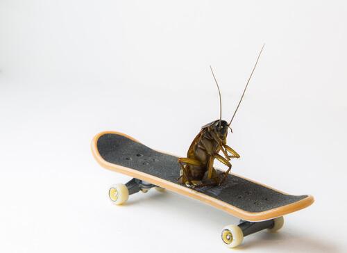 ¿Por qué se dice que las cucarachas son uno de los insectos más antiguos?