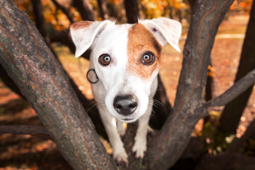 Pupilas dilatadas en perros: causas
