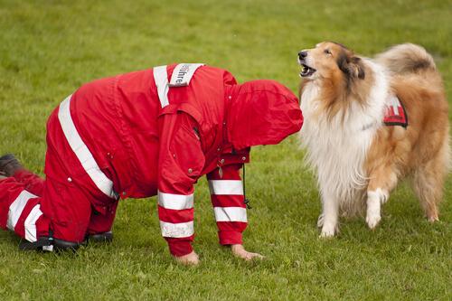 Razas de perros de búsqueda y rastreadores de personas