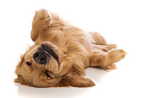 Resultado de imagen de perro feliz
