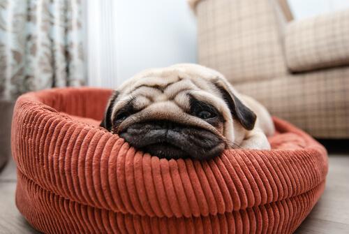 Sueño del perro: duerme mucho