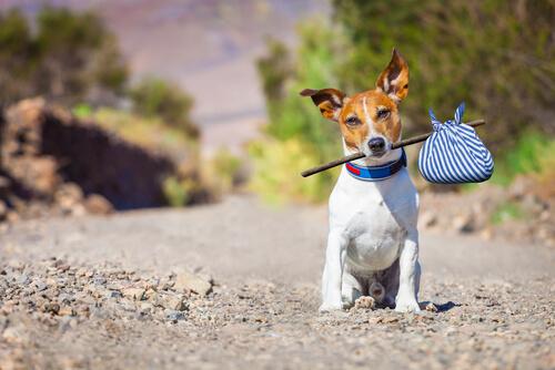 La denuncia por abandono de animales