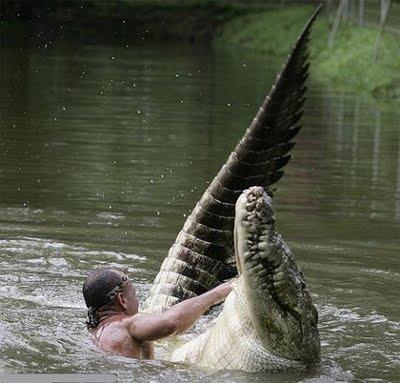 Amistad de un hombre y un cocodrilo.