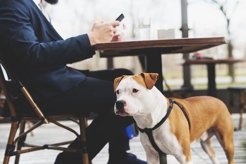 Arnés para perros escapistas