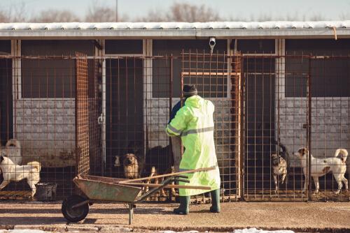 Ayudar a protectoras de animales