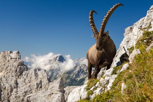 Los animales con cornamentas más espectaculares