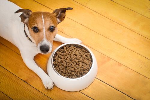 Cambiar alimento del perro