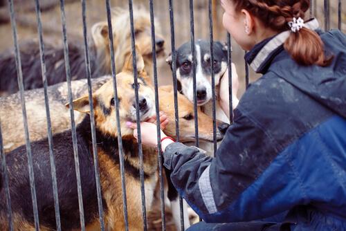 ¿Qué hace un voluntario en una protectora de animales?