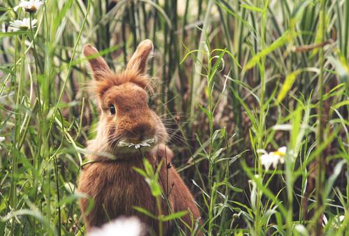 Pautas de alimentación para los conejos