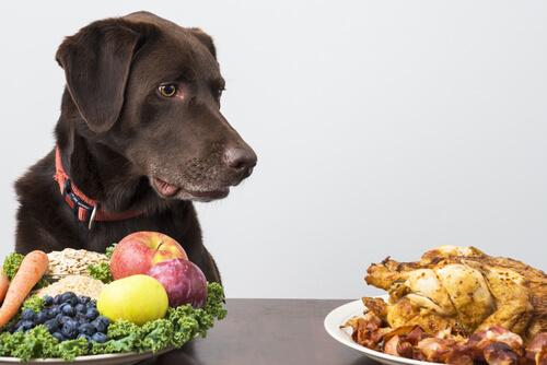 alimentacion correcta de un perro