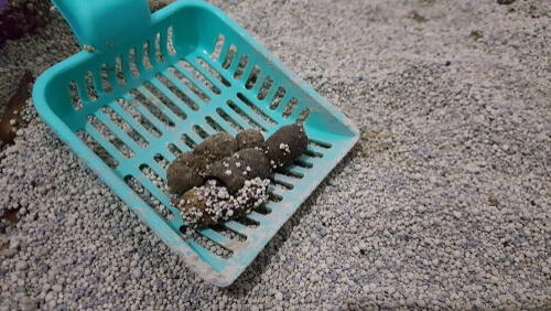 Scooping feces from a litter box to prevent cat litter box odor.