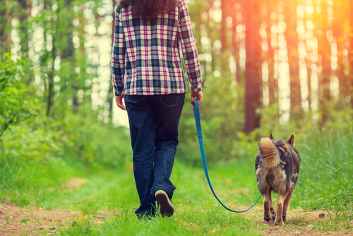 Cuatro maneras de mejorar el paseo con tu perro