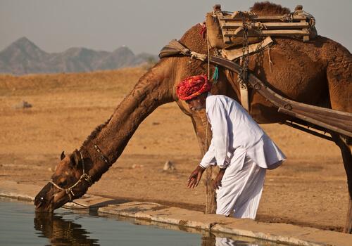 Cuánto bebe un camello de una vez