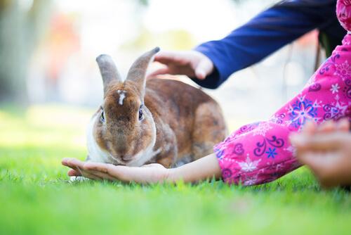 Dieta para conejos domésticos