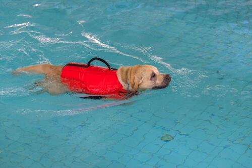 Ejercicios de rehabilitación para mascotas