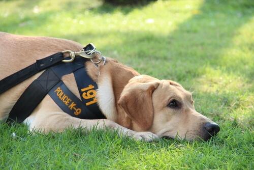 La vida de un perro policía
