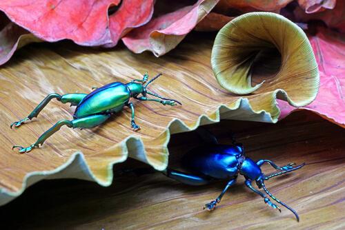6 especies de escarabajos fascinantes