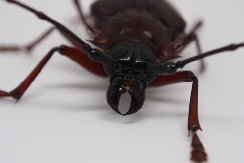 Los insectos más grandes del reino animal