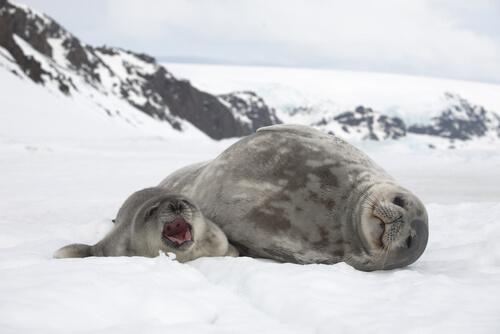 Cómo se protegen los animales del frío