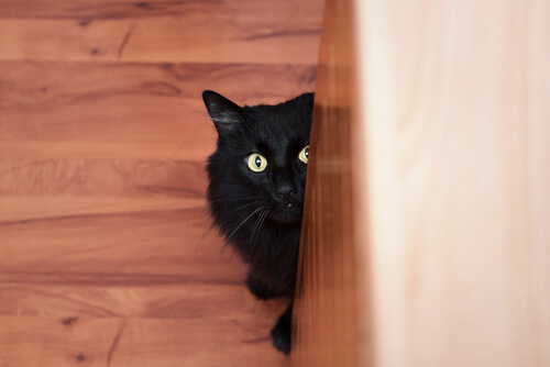 Gato asustado se esconde