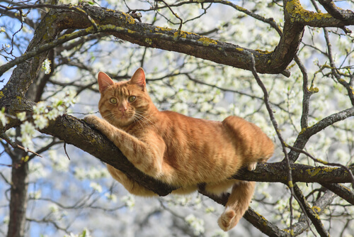 Gato: caída desde la altura