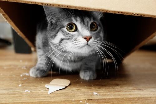 Gato rompe cosas