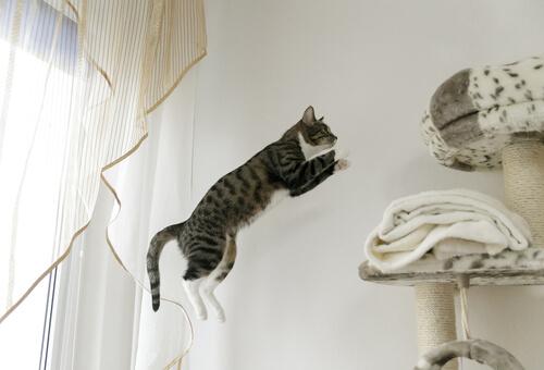 Gato salta y no llega