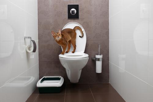 ¿Cómo obtienen orina los gatos?