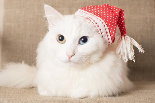 7 razas de gato con pelaje abundante