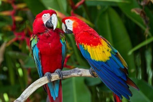 El colorido guacamayo