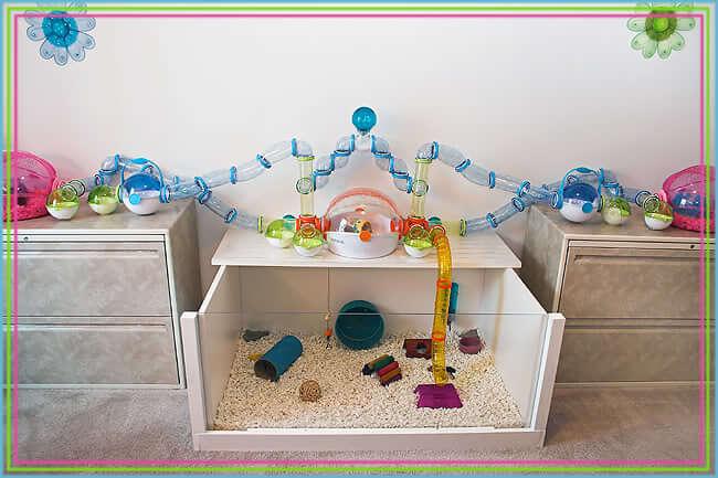 Hamster: juguetes caseros