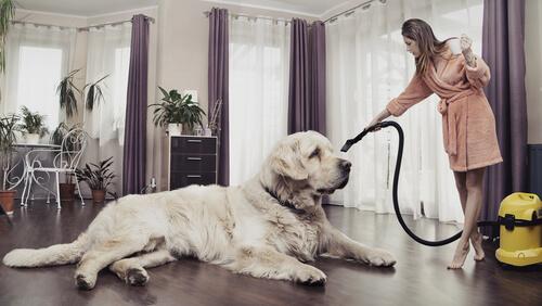 Higiene del hogar con mascotas