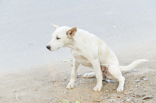 Incontinencia urinaria en perros: síntomas