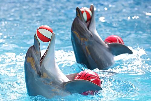 Cómo es el adiestramiento de los delfines