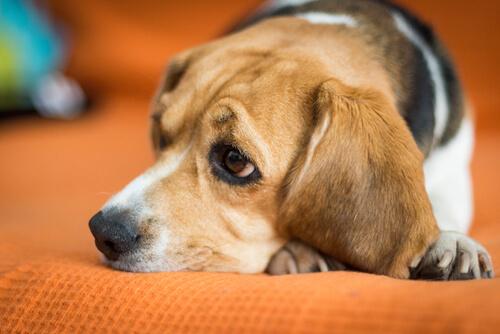 Mascotas: salud mental