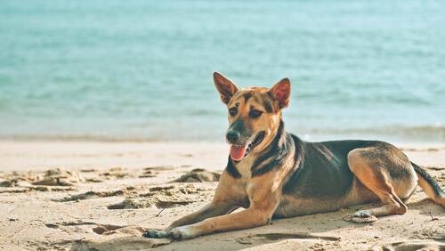 ¿Por qué tu perro se tumba al sol?