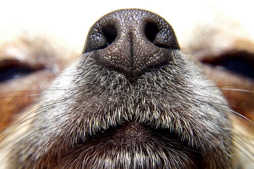 Los perros y el olfato: otra forma de ver el mundo